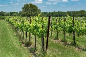 Photo of One of the Most Peaceful North Texas Wineries